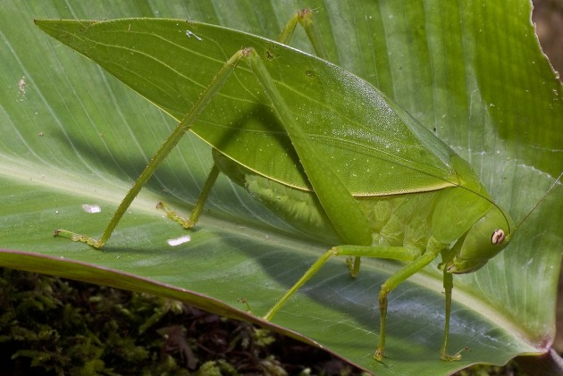 16 Most Gigantic Insects in the World - Page 3 of 9 - Herbeat