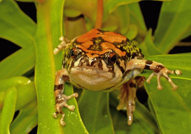 10 Most Remarkable Frogs Herbeat