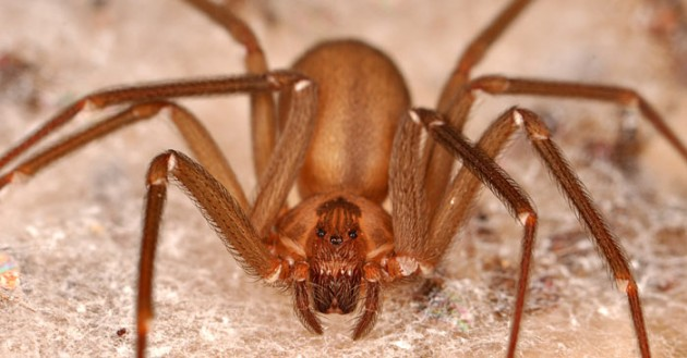10 most dangerous spiders for How to stop spiders coming in your house
