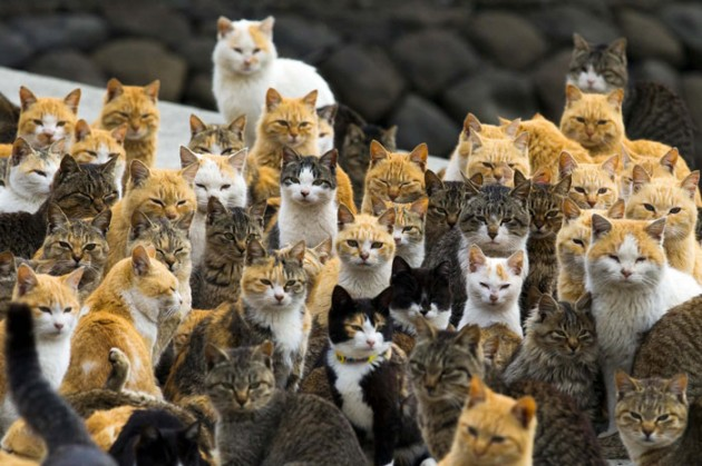 Cats_in_Japan_1
