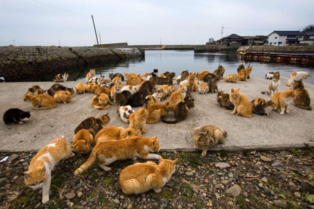Cats_in_Japan_3