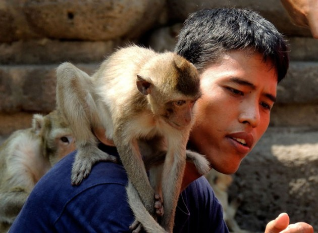 Monkeys_in_Thailand_1