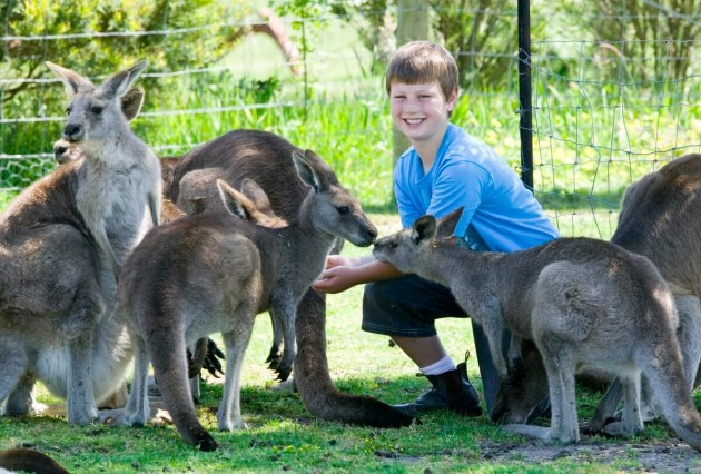 Phillip_Island_Wildlife_Park_1